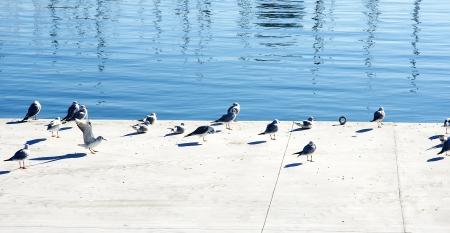 moll: Gulls in moll of the Fusta, Barcelona
