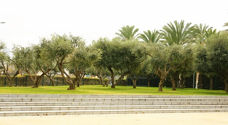 Olive trees in the Teatre Nacional of Catalonia, Barcelona Stock Photo - 17166041