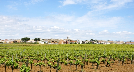 Fields of vineyards in Vilafranca del Penedes, Barcelona Stock Photo
