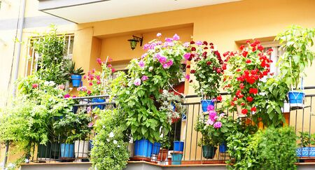 Balcony with potted flowers in Barcelona photo