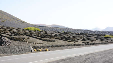 ethnology: Planting vineyards in the valley of La Geria, Lanzarote, Canary Islands Stock Photo