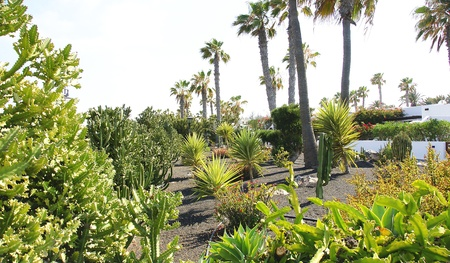 canarian: Gardens in Playa Blanca  Lanzarote, Canary Islands Stock Photo