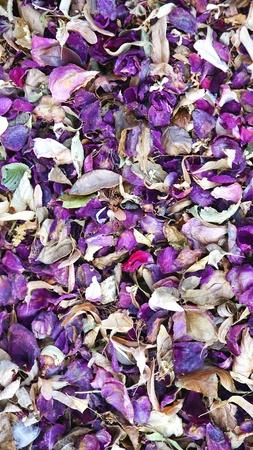 flores secas: flores secas en el suelo para los fondos y texturas Foto de archivo