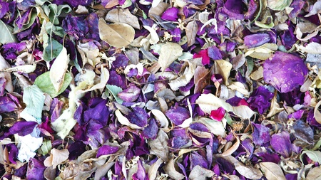 fiori secchi: fiori secchi sul pavimento per sfondi e texture