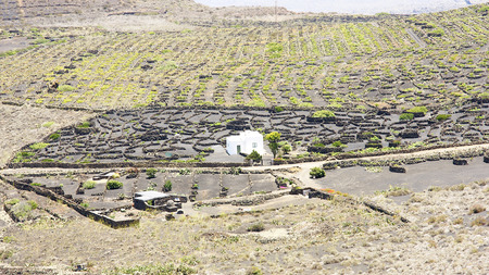 cluster house: Planting vineyards in the valley of La Geria, Lanzarote, Canary Islands Stock Photo