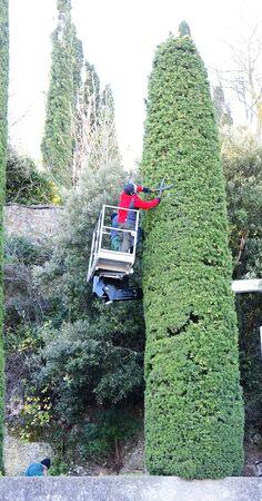 scalar: Man trimming a cypress in Montserrat, Barcelona Stock Photo
