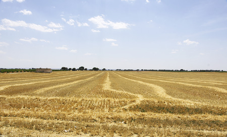 castilla: Fields de Castilla La Mancha, Spain Stock Photo