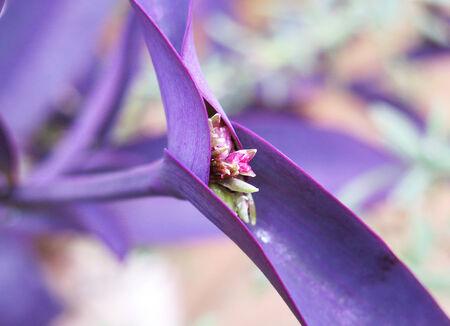 flora: Canary Flora