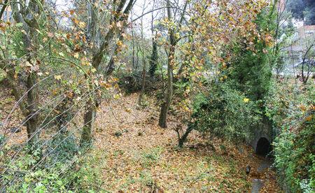 mediterranean forest: Mediterranean forest in winter Stock Photo