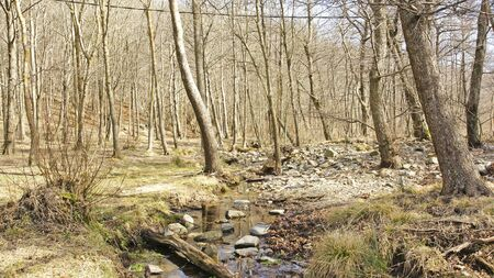 fe: creek in the forest of Santa Fe Montseny, Barcelona