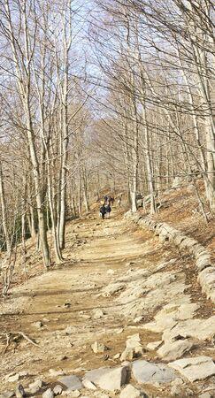 fe: Forest in Santa Fe del Montseny in Barcelona