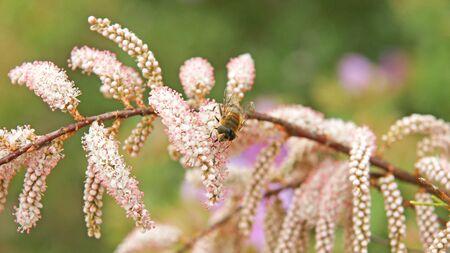 garraf: Flora Natural Park of El Garraf, Barcelona Stock Photo