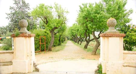 garraf: Road with trees in the Buddhist Monastery of El Garraf, Barcelona