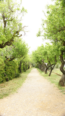 garraf: Road with trees in the Natural Park of El Garraf, Barcelona Stock Photo