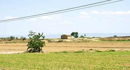 catalunya: Fields planted in Lleida, Catalunya, Spain Stock Photo