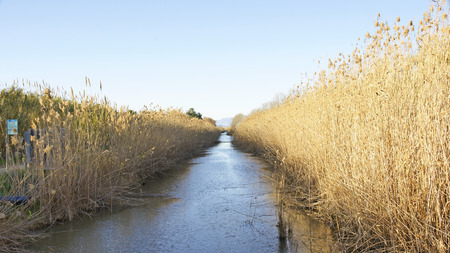 Canal irrigation in the Delta del Llobregat, Barcelona Stok Fotoğraf - 82975063