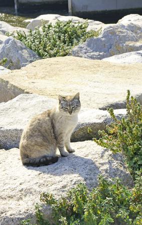 Cat on rock in Barcelona, Catalunya, Spain Stock Photo