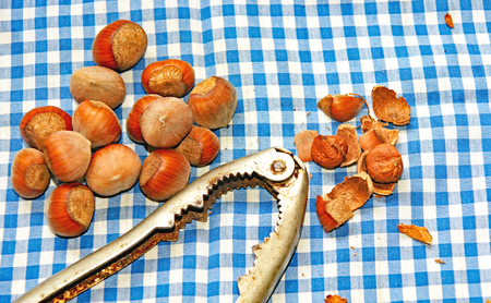 Hazelnut with caster on checkered tablecloth Stock Photo
