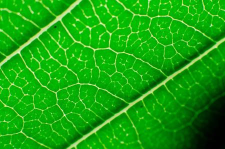 Macro leaf  background photo