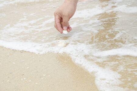 juntar: Recoger conchas marinas