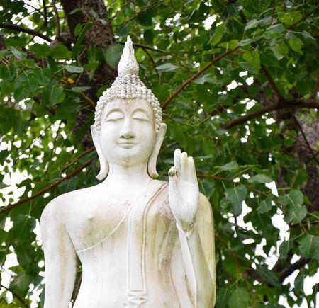 White Buddha under Rompo