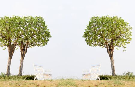 Chairs under the trees