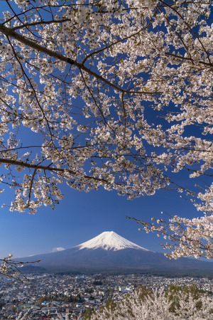 Mt. Fuji from the Cherry Blossom Park
