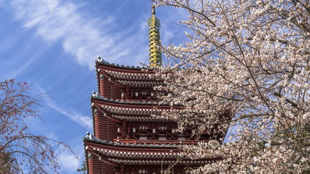 Cherry blossoms in full bloom with a five-story pagoda 写真素材 - 110581596