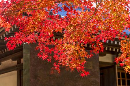Japan autumn landscape 写真素材