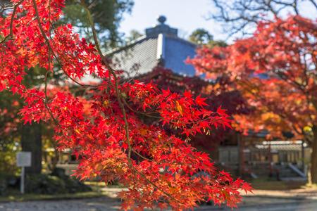 Japan autumn 写真素材