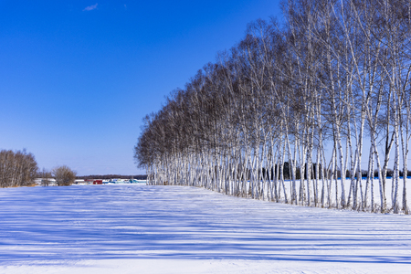 The winter scenery of Hokkaido