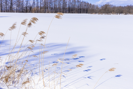 Landscape with snow in in Hokkaido, Japan