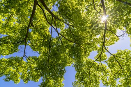 Fresh green leaf Banco de Imagens