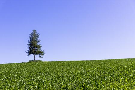 Biei the Hill towns, countryside Фото со стока