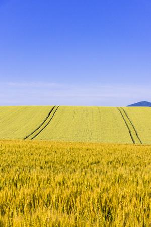 Rural landscape of biei town Hill Фото со стока
