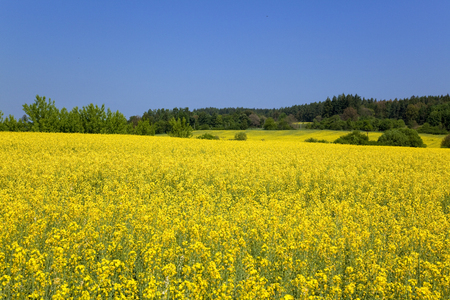 The flowers of the Czech Republic-Bohemia district