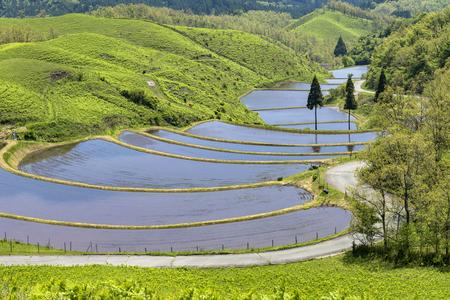 Rice terraces in ASO district, Kumamoto