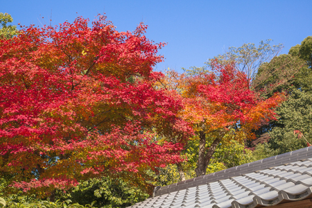 Leaves of autumn in kyoto Imagens