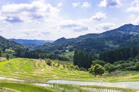 Terraced rice fields in Chiba Prefecture 写真素材