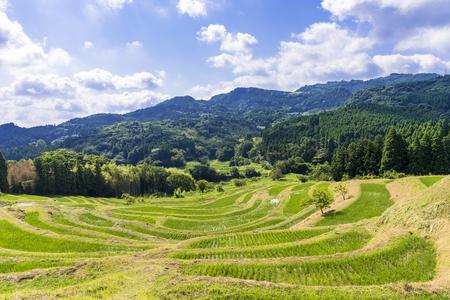 Terraced rice fields in Chiba Prefecture Stok Fotoğraf