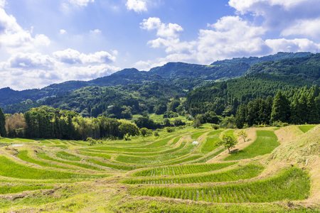 Terraced rice fields in Chiba Prefecture Standard-Bild