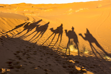 Shadows of camels in the Sahara desert Stock fotó