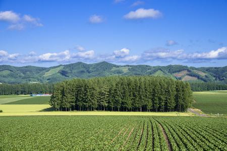 Of the Hokkaido countryside and Windbreak Stock Photo