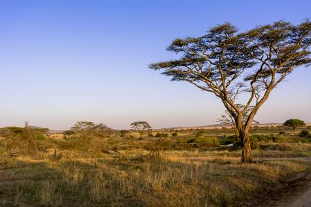 Serengeti National Park 版權商用圖片
