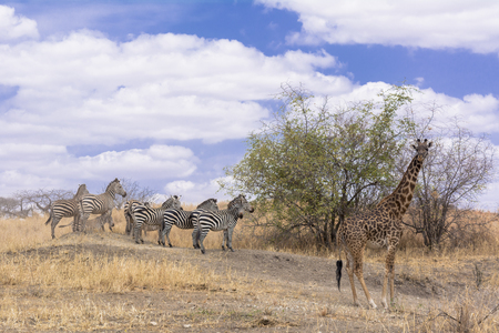 Tarangire National Park in Tanzania