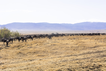 Área de conservación de Ngorongoro en Tanzania