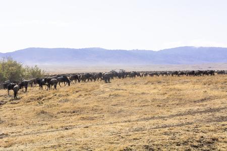 Tanzania's Ngorongoro Conservation area 免版税图像
