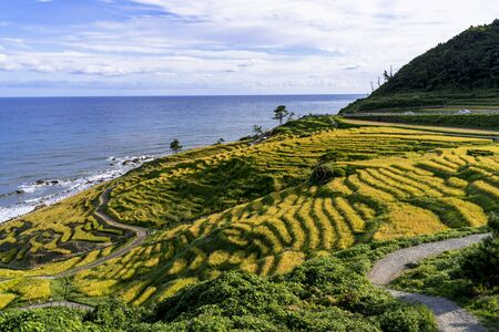 thousand rice terrace  in the Noto Peninsula in autumn