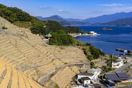 Yusu's thousand rice terrace Фото со стока