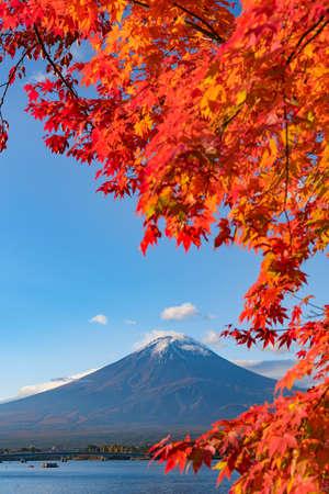 Autumn leaves and Mt. Fuji in Lake Kawaguchiko Фото со стока